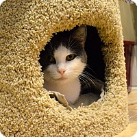 Adopt A Pet :: Sophie - St. Charles, MO