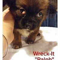 Adopt A Pet :: Wreck-It 'Ralph - Foristell, MO