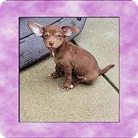 Adopt A Pet :: Bella - Genoa City, WI