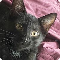 Adopt A Pet :: Simon - Colfax, IA
