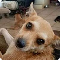 Adopt A Pet :: Chiquita - Aurora, CO