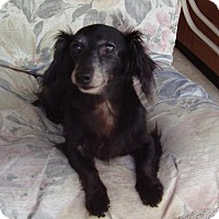 Adopt A Pet :: Gracie - Jacksonville, FL