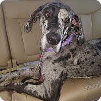 Adopt A Pet :: Sophie - Davenport, IA