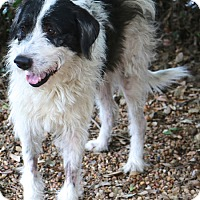 Adopt A Pet :: Weezel - Woonsocket, RI