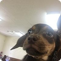 Adopt A Pet :: Benny - Patterson, NY