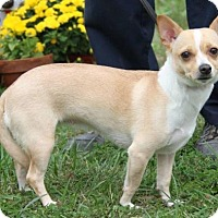 Adopt A Pet :: Thalia-ADOPTED - Livonia, MI