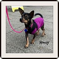 Adopt A Pet :: Honey - Gig Harbor, WA