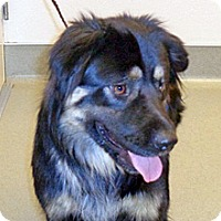 Adopt A Pet :: Petey - Wildomar, CA
