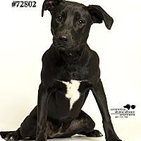 Adopt A Pet :: Magnolia - Baton Rouge, LA