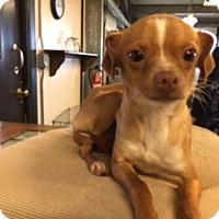 Adopt A Pet :: BARRY - Elk Grove, CA