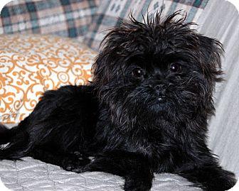 Rescue Dogs Little Rock Arkansas