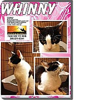 Adopt A Pet :: Whinny - Miami, FL