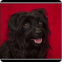 Adopt A Pet :: Terra - Fort Braff, CA