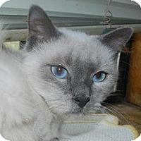 Adopt A Pet :: Cowboy - Ennis, TX