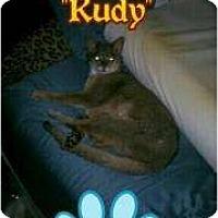 Adopt A Pet :: Rudy - Lantana, FL