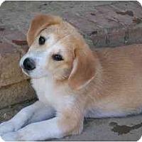 Adopt A Pet :: Mryna - Albany, NY