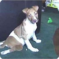 Adopt A Pet :: Happy - Fowler, CA