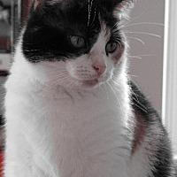 Adopt A Pet :: zz 'Nala' courtesy listing - Cincinnati, OH