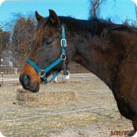 Thoroughbred for adoption in Laurel, Delaware - Marki