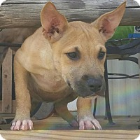 Adopt A Pet :: Sara - Toms River, NJ