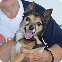 Adopt A Pet :: Sarge - Sparta, NJ