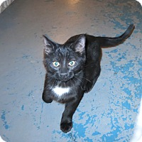 Adopt A Pet :: Rudy - Geneseo, IL