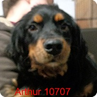 Adopt A Pet :: Arthur - baltimore, MD