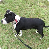 Adopt A Pet :: Faith 0696 - Jacksonville, FL