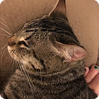 Adopt A Pet :: Ducky - Nuevo, CA