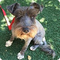 Adopt A Pet :: Martha AKA Martie - Redondo Beach, CA