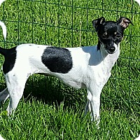 Adopt A Pet :: Carlie - New Oxford, PA
