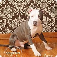 Adopt A Pet :: Zane - Topeka, KS