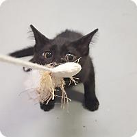 Adopt A Pet :: Martha - Fort Riley, KS