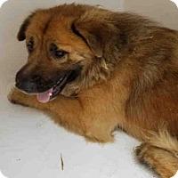 Adopt A Pet :: CLARISE - Atlanta, GA