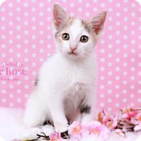 Adopt A Pet :: Autumn - Sterling Heights, MI