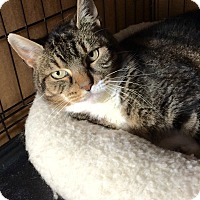 Adopt A Pet :: Maddie - Plainville, CT