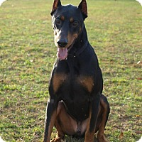 Adopt A Pet :: Auggie - Bristolville, OH