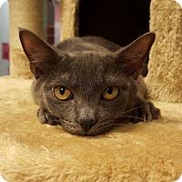 Adopt A Pet :: Coot - Grayslake, IL