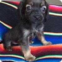 Adopt A Pet :: Laurel - Lindale, TX
