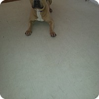 Adopt A Pet :: Blaze - Parkton, NC