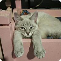 Adopt A Pet :: Chop Suesy - Taylor, MI