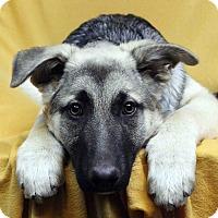 Adopt A Pet :: TAOS - Westminster, CO