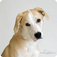Adopt A Pet :: Lilly - Naperville, IL