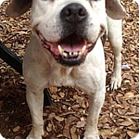 Adopt A Pet :: mia - hollywood, FL