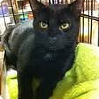 Adopt A Pet :: Pixel - Pittstown, NJ