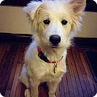 Adopt A Pet :: Dandelion - Hilliard, OH