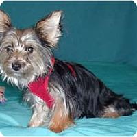 Adopt A Pet :: Baxter - Mooy, AL