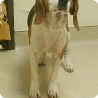 Adopt A Pet :: Daisy2 - Gary, IN