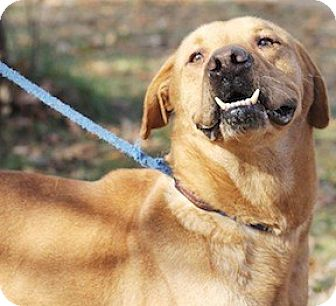 Labrador Retriever Mix Dog for adoption in Tahlequah, Oklahoma - Doug