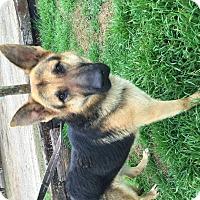 Adopt A Pet :: Nolan - Bowie, TX